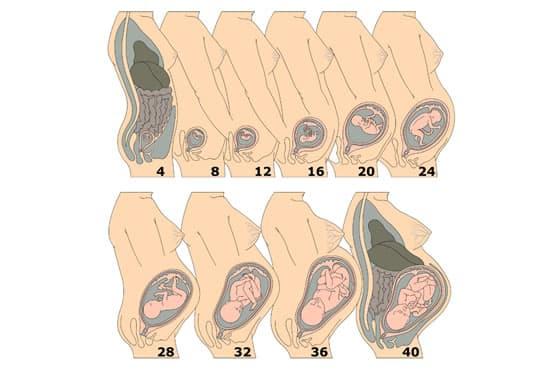 schwangerschaft erste tage nach befruchtung