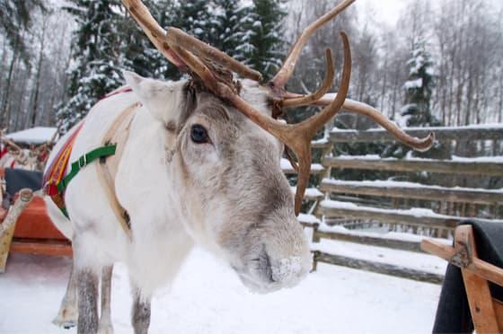 Weihnachtsbräuche aus aller Welt