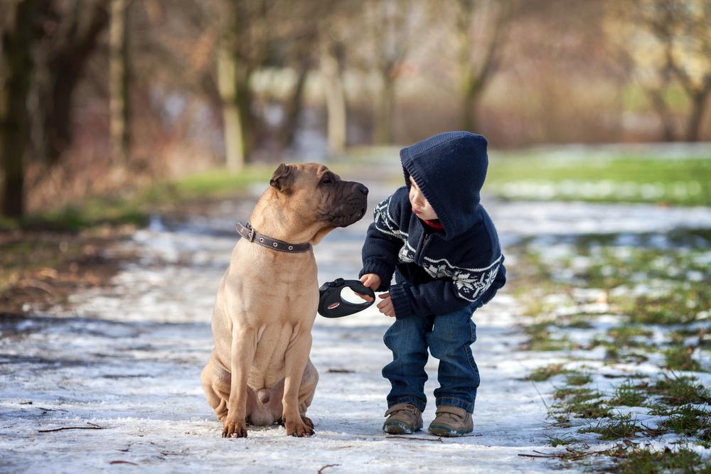 4 wichtige Gründe, warum Ihr Kind mit einem Hund aufwachsen sollte