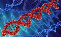 Unfruchtbar durch Chromosomen-Anomalie