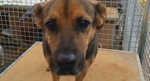 Foto: DRINGEND Pflegeplätze für Hunde gesucht!