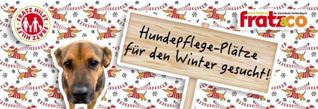 DRINGEND Winterpflege-Plätze für Hunde gesucht!