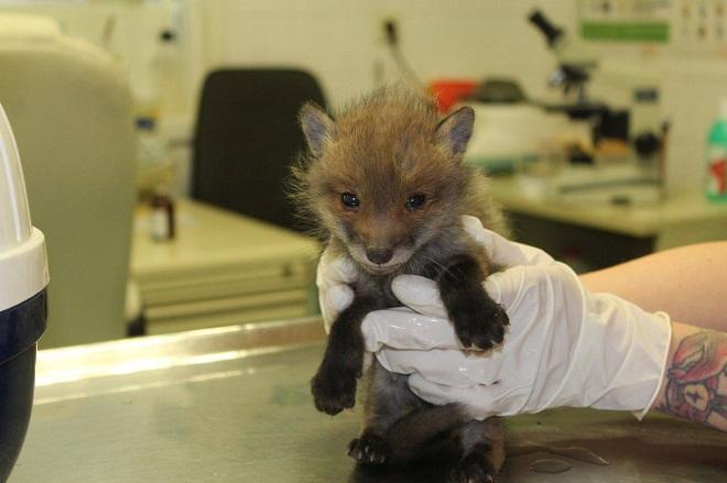 Foto: Felix, der glückliche Fuchs
