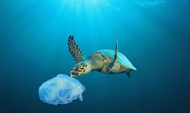 Tag des Meeres – Denn Klimaschutz geht uns alle etwas an!
