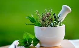 Heilkräuter und -pflanzen von A-Z
